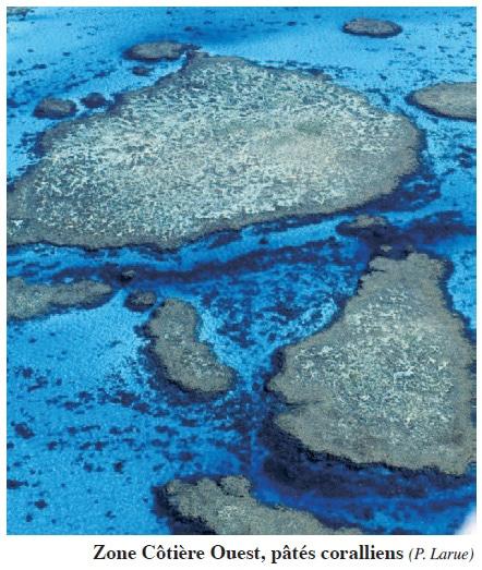 Pâtés coraliens
