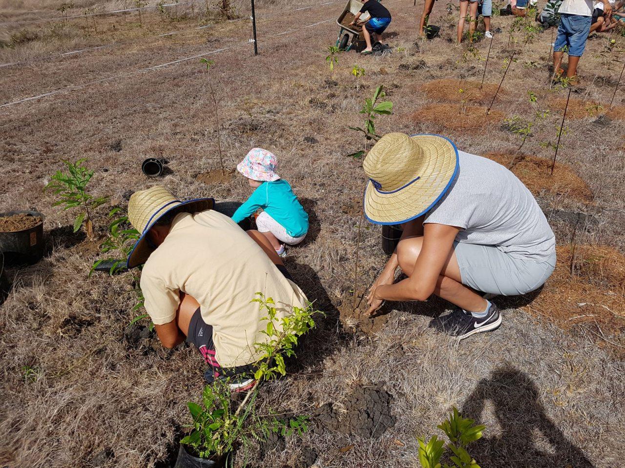 Plantation participative au Domaine de Déva pour reboiser la forêt sèche de Bourail.