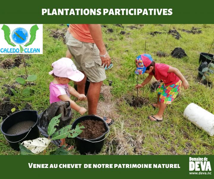 Organisation de plantations participatives au Domaine de Déva pour reboiser la plus grande forêt sèche de Nouvelle-Calédonie