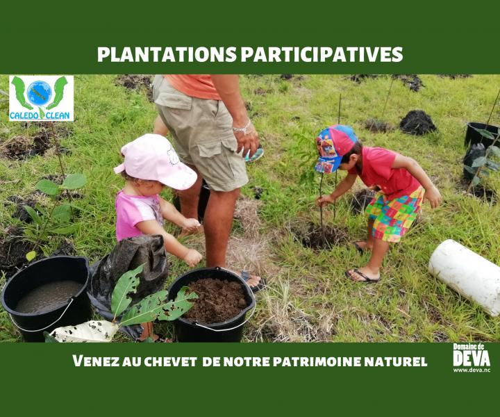 Organisation de plantations participative ouvertes au grand public sur la Domaine de Déva pour reboiser la plus grande forêt sèche de Nouvelle-Calédonie