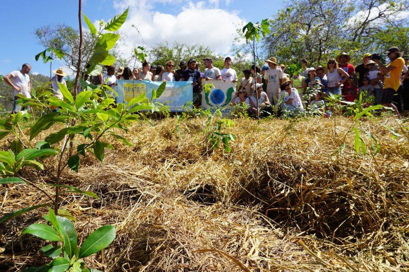 Opération de reboisement de la forêt sèche du Domaine de Déva à Bourail